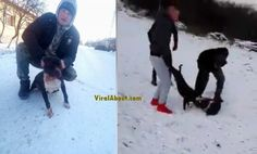 Guy Arrested After a Video Of His Pit Bull Nearly Killing Another Dog Goes Viral http://viralabout.com/guy-arrested-after-a-video-of-his-pit-bull-nearly-killing-another-dog-goes-viral/ This young man from Arad, Romania was arrested by the local police after he posted a video on Facebook showing his pit bull dog attacking a chained dog.  It seems he did this just to entertain his friends. The cruel footage was taken with a mobil phone and shared on Facebok.