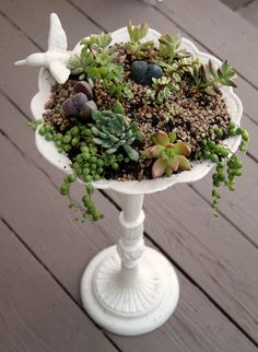 Succulents and living stones in a bird bath
