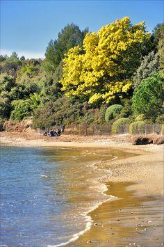 Même sur la plage - Bormes-les-Mimosas (Var), Provence-Alpes-Côte d'Azur_ France