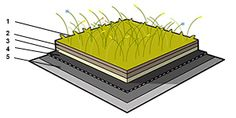 Torräng för tak Sedum ört grästak ängstak naturtak Sedum Roof, Buildings, Clay, House, Clays, Home, Homes, Modeling Dough, Houses