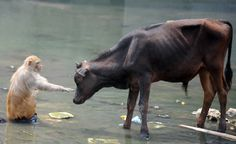Interesting interaction (Prakash Mathema / AFP - Getty Images)