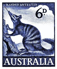 1959 Australia Banded Anteater Postage Stamp by Retro Graphics Rare Stamps, Vintage Graphic Design, Australian Animals, Mail Art, Stamp Collecting, Retro, Postage Stamps, Fine Art America, Poster