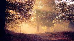 a morning walk | Flickr: partage de photos!