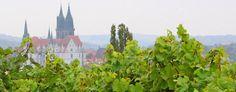Schloss Proschwitz baut ebenfalls Scheureben an.