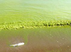 15 Contaminación de químicos y pesticidas en el Lago Erie