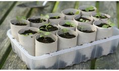 DIY semillero manualidades rollos papel higienico
