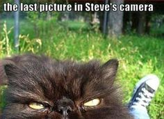Funny Animal Pictures Of The Day – 23 Pics #travelfunny