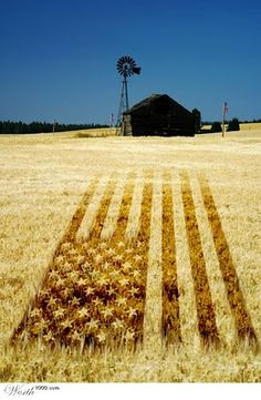 """~ """"Amber Waves of Grain"""" ~ God Bless America! ~ I Love This Country! ~ Happy of July! I Love America, God Bless America, America America, Awesome America, Country Life, Country Girls, Country Living, Country Charm, Country Roads"""