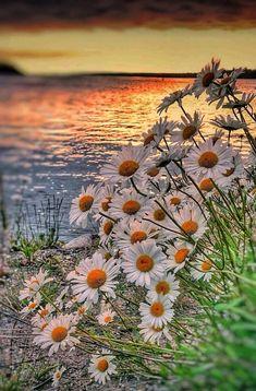 Relaxing morning... thinking of you beautiful!!