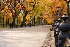 central park.. autumn..