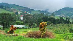 Entre Zapote y Zarcero en la ruta 141, Alajuela Costa RIca