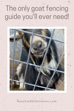Goats love to climb, jump, and they can squeeze through holes a fraction of their size somehow. Save for later! Miniature Goats, Goat Toys, Nubian Goat, Goat Care, Raising Goats, Goat Farming, Pet Health, Livestock, Fence