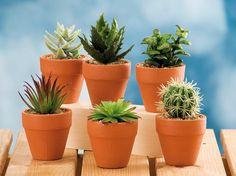 Vaso CPlantas 6M Sort D7xA11cm  Plantas/Flores Artificiais Decorativas   Utilidades Domésticas  Vasos com plantas   Marmair  http://www.marmair.pt/detalhe.php?p=4822