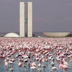 J'adore. .. #oscarniemeyer #architectureporn #brasilia #brazil #midcenturymodern #modernist #pink #flamingos #skyline #lavender