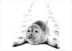 prize in a calendar in aid of Marine Conservation donated by Leon Evans http://www.artdonor.org/