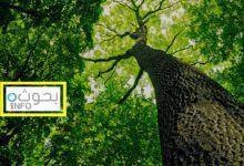 بحث حول النباتات تعريفها أنواعها وعلاقة الانسان بها Plants Tree Tree Trunk
