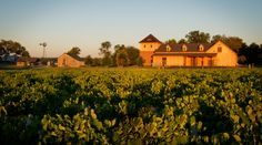 View of the winery during sunrise located on Bohemia Manor Farm #ChateauBuDeWinery #MarylandWine #VAWR