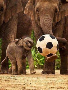 ANIMALS TIME : Elephants time (Hora de los elefantes)