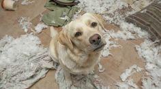 AG Personal Organizer : Meu PET é uma Bagunça!!