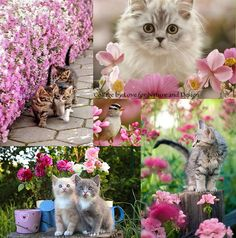 love for nature and design Beautiful Collage, Beautiful Cats, Collages, Color Collage, Collage Art, Cat Flowers, Pink Flowers, Animal Pictures, Cute Pictures