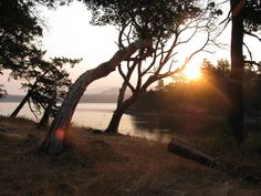 Madrona Point. One of my favorite places on Earth. courtesy of FWWH