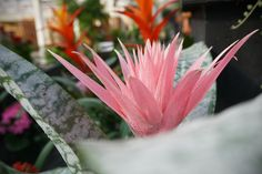 Indoor plants that dazzle. Indoor Gardening, Indoor Plants, Inside Plants