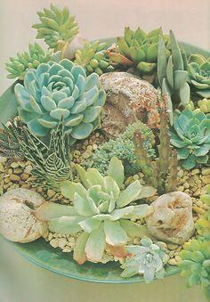 Retro succulent gard