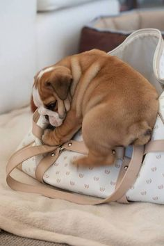 Awe... Please don't leave without me!