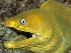 Electric Eel Facts: How Do Electric Eels Produce Electricity
