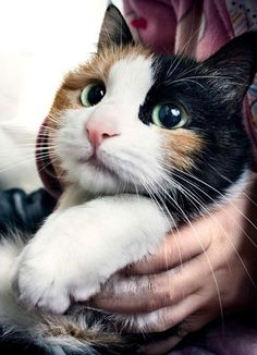 ꒰๑͒o̴̶̷̤ꈊ͒ू o̴̶̷̤๑͒꒱  #neko #cat