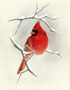 The Visitor, Cardinal. x Giclee print of an original Pastel drawing Bird Painting Acrylic, Watercolor Bird, Painting & Drawing, Watercolor Paintings, Christmas Paintings, Christmas Art, Winter Drawings, Watercolor Christmas Cards, Bird Drawings