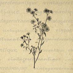 Printable Image Wild Daisy Flower Graphic Wildflower Digital Download Antique Clip Art Jpg Png Eps 18x18 HQ 300dpi No.2802 @ vintageretroantique.etsy.com #DigitalArt #Printable #Art #VintageRetroAntique #Digital #Clipart #Download