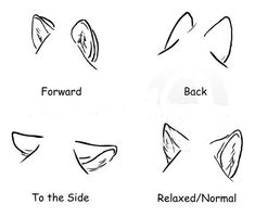 How to draw wolf ears Comment dessiner des oreilles de loup Drawing Techniques, Drawing Tips, Drawing Sketches, Drawing Ideas, Dog Sketches, Chibi Drawing, Animal Sketches, Animal Drawings, Drawing Animals