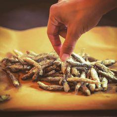 Per il prano di oggi suggeriamo una bella (e buona) frittura di acquadelle... (ph. @storytravelers ) #picoftheday #volgoitalia #vivo_italia #emiliaromagna #enogastronomia #food @volgoemiliaromagna @vivo_italia @vivoemiliaromagna @turismoer @myturismoer @igersferrara @igersemiliaromagna @igersitalia @ig_ferrara @ig_emiliaromagna @ig_emilia_romagna @visitferrara @emilia.romagnafood @love_food @sagredintorni @sagreinromagna
