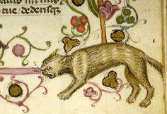 Cat hissing at a dog | from a Breviary, Taranto, Italy, between 1350 and 1400  [Morgan Library]