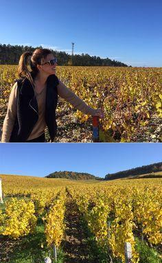 la chabliesienne, chablis, vinho branco, vinho tinto, vinicola, vinho, frança, borgonha, natureza, gastronomia, viagens, parreira, uva, passeio, romance, paisagem