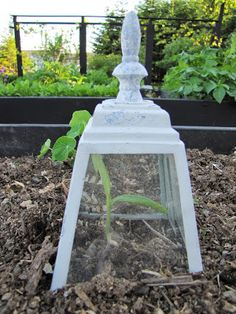 LittleMissMaggie Wired Garden Cloche how to make a cloche