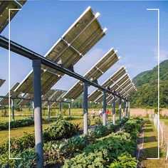 Sustainability and Agriculture ☀️ 🌱 Agrivoltaic not only increases food production with greater water-use efficiency it also optimises solar power generation due to plant-based understory. Give us a call to get your personalised agrivoltaic solution now. Agriculture, Farming, Solar Power, Sustainability, Plant Based, Sport, Water, Outdoor Decor, Plants