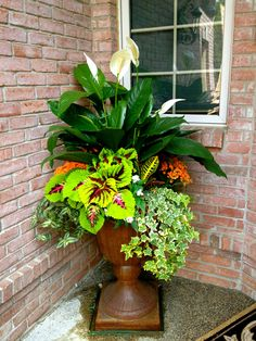 Ivy, coleus, croton, and peace lily make a great combination for shade!