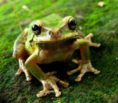 Frog - WetCanvas | Reference Image Library