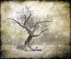 *Winter Magic* - amazing landscape in #secondlife