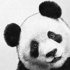 Little Panda, Panda Love, Cute Panda, Panda Sketch, Panda Drawing, Animal Sketches, Animal Drawings, Art Sketches, Panda Painting