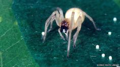 Yellow sac spider - attracted to petrol lays its eggs in petrol tanks. Unfortunately, this action caused the risk of fire. It also forced Mazda to issue a voluntary recall notice so it can apply a software fix to its cars.  Now - this is a bug that no software engineers can fix - hahaha.