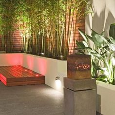 Bamboo Plant Design, Pictures, Remodel, Decor and Ideas - page 2