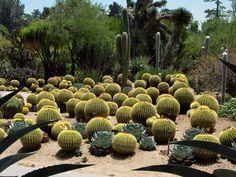 Joylene cactus garden - Buscar con Google