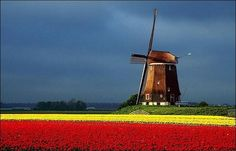 The tulip fields of Holland are amazing. Even if you aren't a flower person like me!