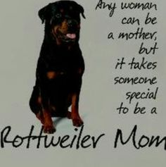 im must be super special cuz im a human mother and a rottweiler mother and some doberman mixes too Rottweiler Quotes, Rottweiler Love, Rottweiler Puppies, Rottweiler Facts, German Rottweiler, Beagle, Big Dogs, I Love Dogs, Puppy Love
