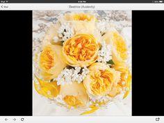 Yellow David Austin roses