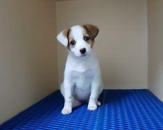 Cani in vendita e in regalo a Siracusa - Kijiji: Annunci ...