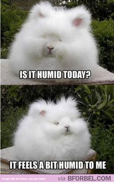Curly hair problems- Humidity